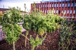 Urban Gardening Restaurant