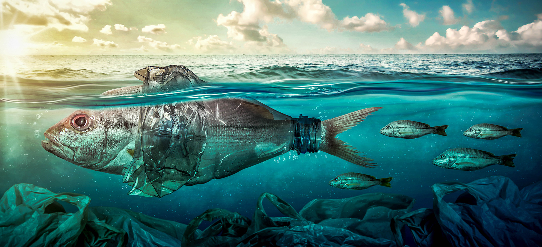 Fish in see with plastic waste- aqua culture - sustainability