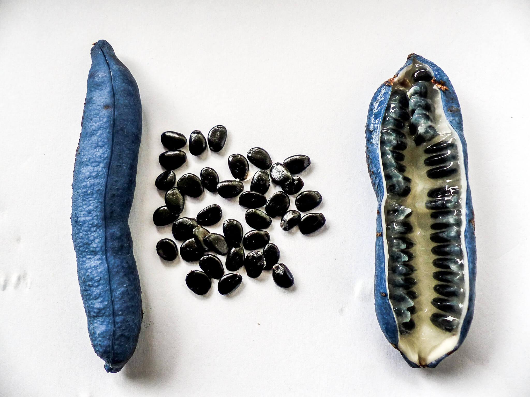 Blaugurke kochen Restaurant Gericht