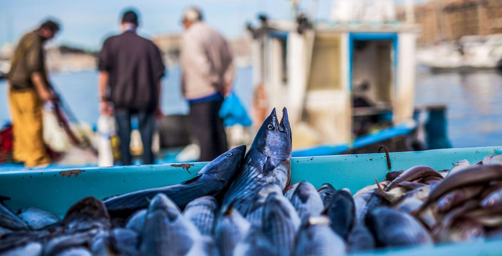 Sustainable eating Fish Ocean