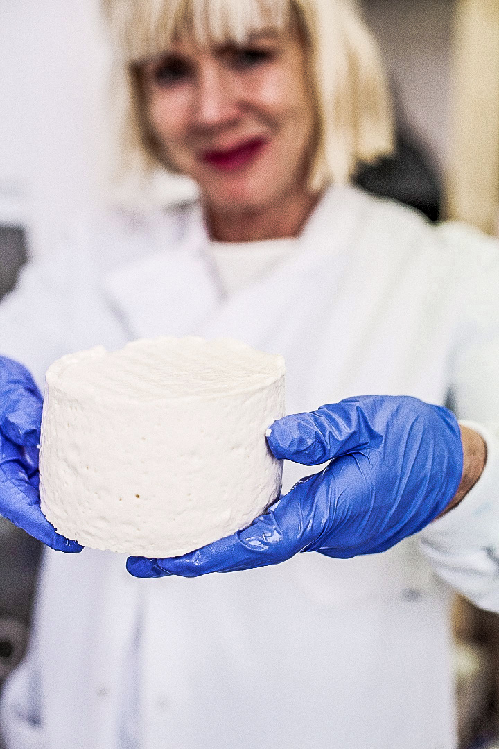 Which bacteria can be used to make cheese?