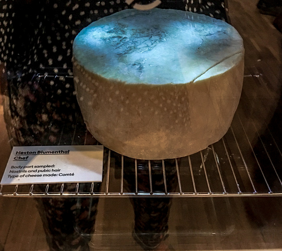 Can you make cheese from body bacteria?